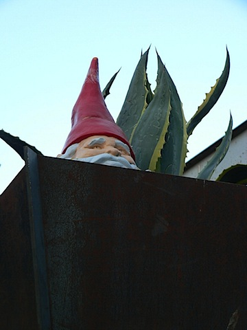 gnome in container.jpg